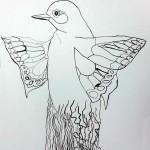 Oiseau imaginaire