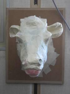 Vache vue de face