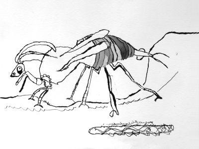 Insecte étrange