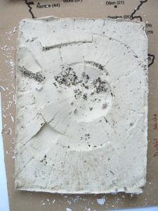 Empreinte de souche en plâtre