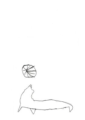 Otarie avec un ballon