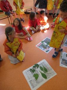 Choisir deux feuilles d'arbre