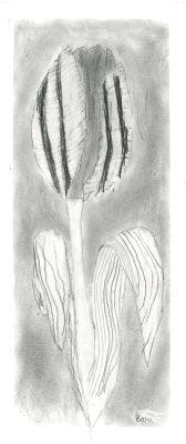 Tulippe dessinée par un enfant de CM1