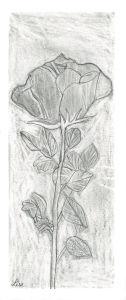 Dessiner des fleurs au crayon